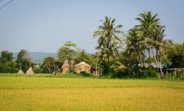 Gisement de riz dans Phu Yen, Vietnam Photos libres de droits