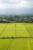 Gisement de riz de Bali. Photographie stock libre de droits