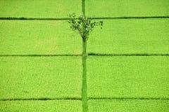 Gisement de riz de Bali. Image libre de droits