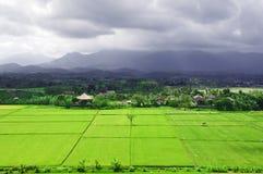 Gisement de riz de Bali. Images libres de droits