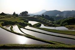 Gisement de riz de campagne photographie stock