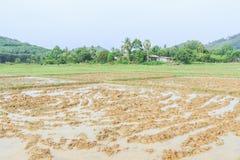 Gisement de riz de charrue avant saison de ensemencement photo stock