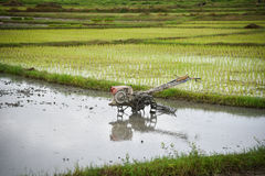 Gisement de riz de charrue de tracteur de talle Images libres de droits