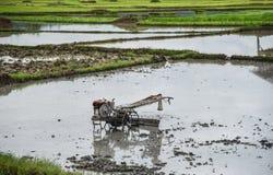 Gisement de riz de charrue de tracteur de talle Photo stock