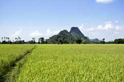 Gisement de riz en Thaïlande Photo stock
