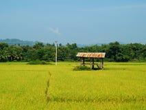 Gisement de riz en Thaïlande photos libres de droits