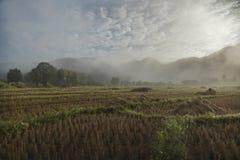 Gisement de riz en Thaïlande du nord Image libre de droits