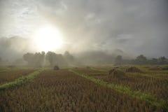 Gisement de riz en Thaïlande du nord Photo stock