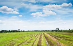 Gisement de riz et le ciel photos stock