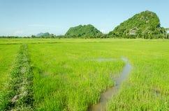 Gisement de riz et peu de montagne Photos stock