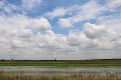 Gisement de riz non-décortiqué sur le ciel blanc bleu Photographie stock