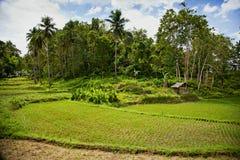 Gisement de riz, Philippines Photos libres de droits