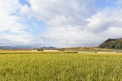 Gisement de riz sous le ciel bleu Photos stock