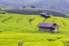Gisement de riz de terrasses de PA Bong Piang Greenery de Baan dans Chiangmai, Thaïlande image stock