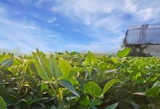 Gisement de soja photos libres de droits