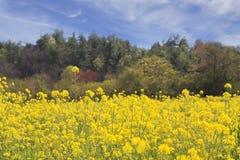 Gisement de source des fleurs Photo libre de droits