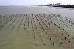 Gisement de varech à la plage de l'île de xiaodeng, porcelaine Image stock