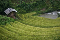 Gisement en terrasse de riz Images libres de droits
