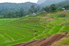 Gisement en terrasse vert de riz. Photo stock