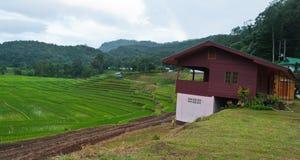 Gisement en terrasse vert de riz. Images stock