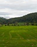 Gisement en terrasse vert de riz. Photo libre de droits
