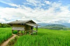 Gisement en terrasse vert de riz au village de PA Bong Piang Image libre de droits