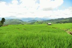 Gisement en terrasse vert de riz au village de PA Bong Piang Photo stock