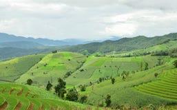 Gisement en terrasse vert de riz au village de PA Bong Piang Photographie stock libre de droits