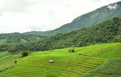 Gisement en terrasse vert de riz au village de PA Bong Piang Photos stock
