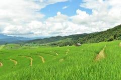 Gisement en terrasse vert de riz au village de PA Bong Piang Photographie stock