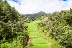 Gisement en terrasse vert de riz dans Chiangmai, Thaïlande Photographie stock libre de droits