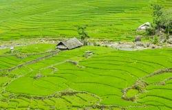 Gisement en terrasse vert de riz dans Sapa, Lao Cai, Vietnam du nord-ouest Photographie stock libre de droits