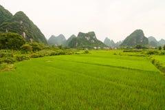 Gisement et calcaires de riz de sud de la Chine photographie stock