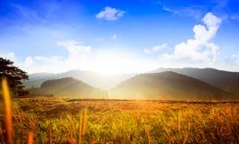 gisement et montagne de riz Photographie stock libre de droits