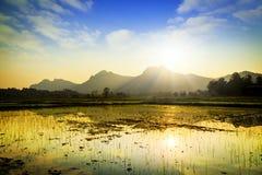 gisement et montagne de riz Photos libres de droits