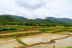 gisement et montagne de riz Images libres de droits