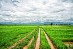 Gisement et montagnes de riz Photographie stock