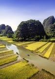 Gisement et rivière de riz dans TamCoc, NinhBinh, Vietnam Images stock