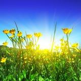 Gisement et soleil de fleur. Photographie stock