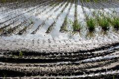 Gisement inondé de pomme de terre Images libres de droits