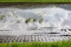 Gisement inondé de pomme de terre Image stock
