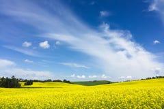 Gisement jaune de canola contre le ciel nuageux Photos stock