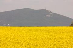 Gisement jaune de floraison de graine de colza Photographie stock libre de droits