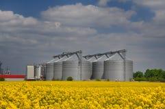 Gisement jaune de graine de colza avec des silos Photo stock