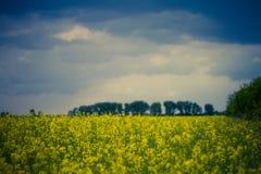 Gisement jaune de graine de colza en Hongrie Image libre de droits