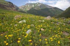 Gisement jaune de pissenlit avec la montagne Images libres de droits