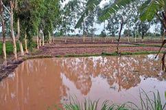 Gisement paisible de riz dans la province rurale de Sakhon Nakhon en Thaïlande du nord Photo stock