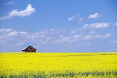 Gisement rouge de Canola de prairie de grange photographie stock