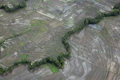 Gisement rural de riz Photo libre de droits
