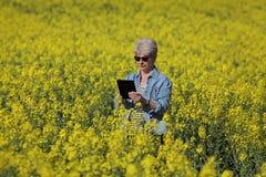 Gisement se développant de examen de graine de colza d'agronome féminin photos stock